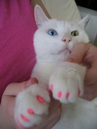 Насадки котам на ногти