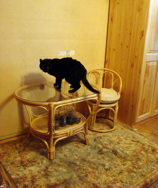 автомобилей кот лазиет по столом что делать этом