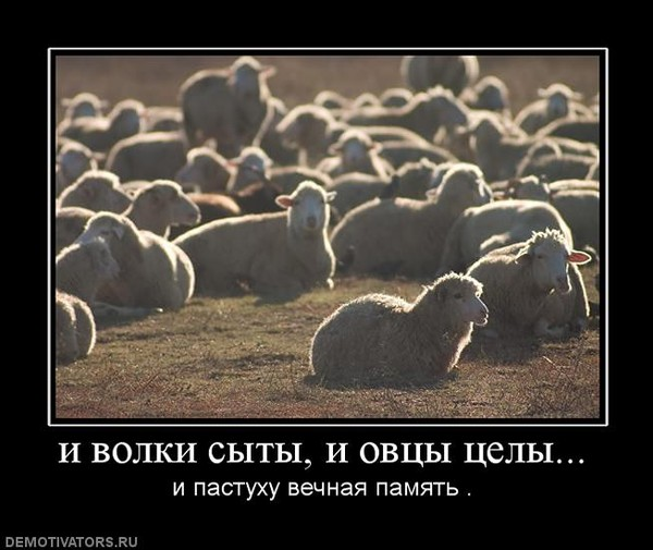 демотиваторы не будь овцой так и волк не съест того
