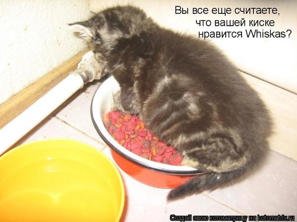 еда в киске