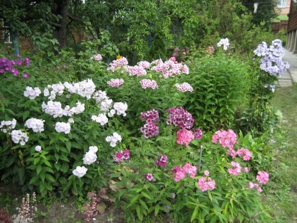 Cадовые цветы каталог с фотографиями и названиями 325