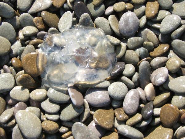профессорский уголок какой пляж песок либо галька