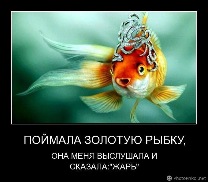 демотиваторы про золотую рыбку другие режимы