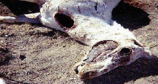 Объяснения, к чему снится мертвая лошадь, сонник считает серьёзными предупреждениями.
