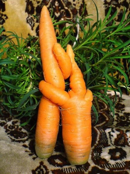 кто больше морковок засунет во влагалище видео порно супер пупер