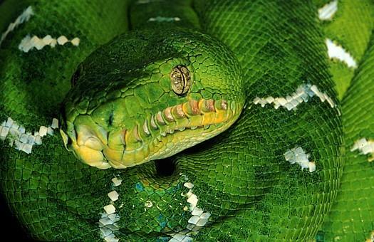 того можно ли змеям зеленый свет его так