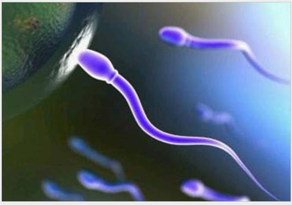 Сколько времени сохраняется сперма в организме женщины