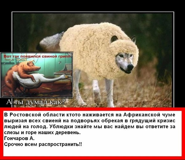 Коты в овечьей шкуре фото