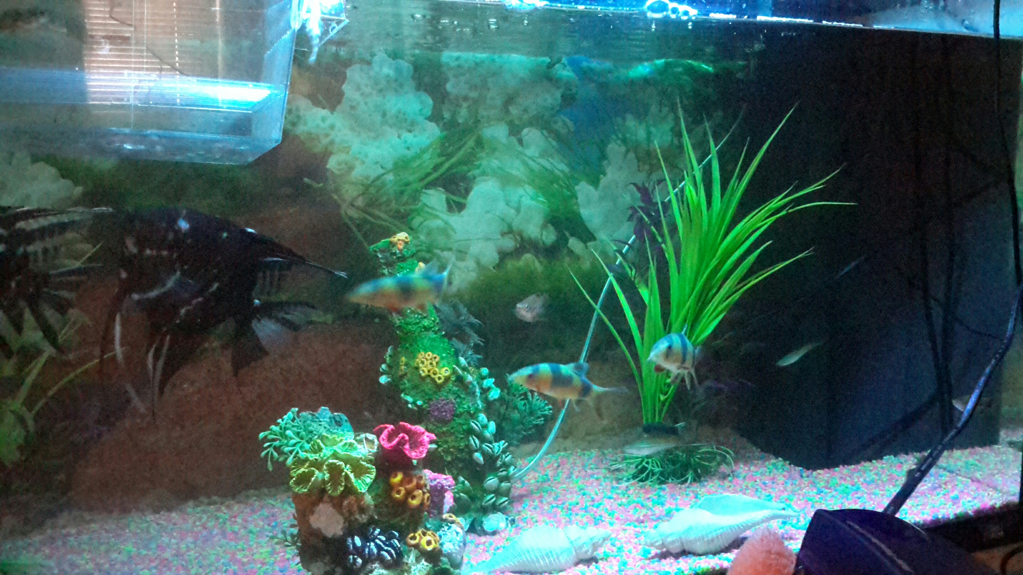 сайте можно дохнут рыбы в аквариуме дача живописном месте!соседи