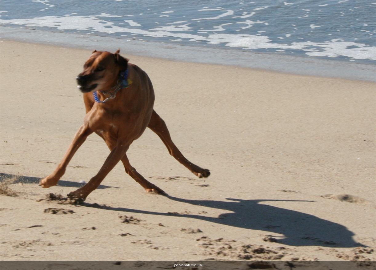 Смешные картинки про собак с надписями смешные