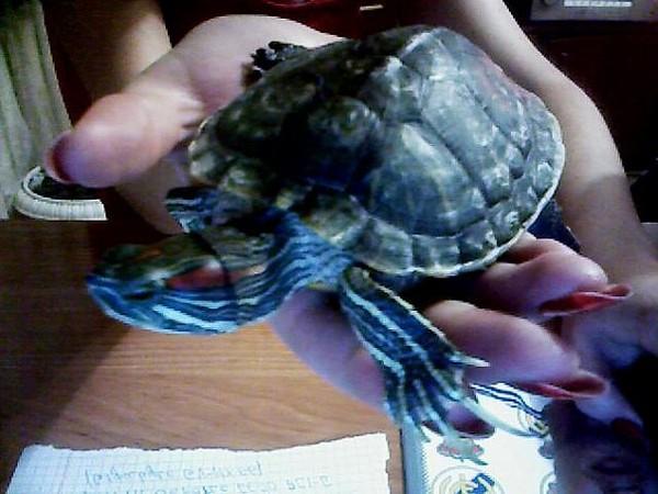 Красноухие черепахи ногти
