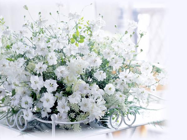 Картинки нежных цветов