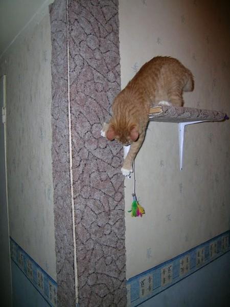 Кот подрал обои. что делать