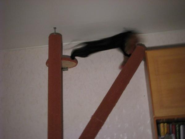 Отучить кота прыгать на шторы