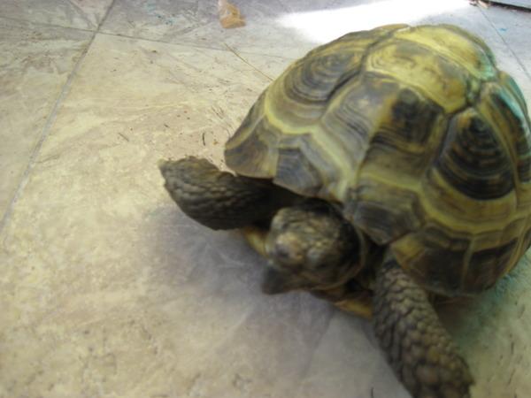 черепахи это рептилии