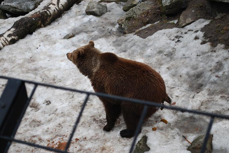 Ответы@citiesoftheworld.ru: Где срет медведь?