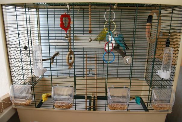Ответы@mail.ru: как ставить гнездовой домик для попугаев в к.