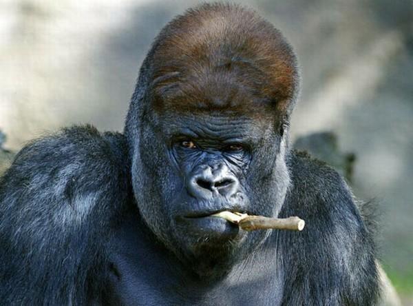 красивая обезьяна картинки