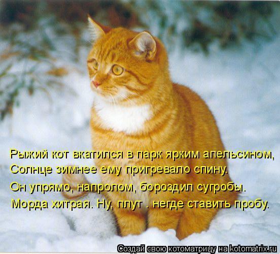 Картинки рыжего кота смешные короткие