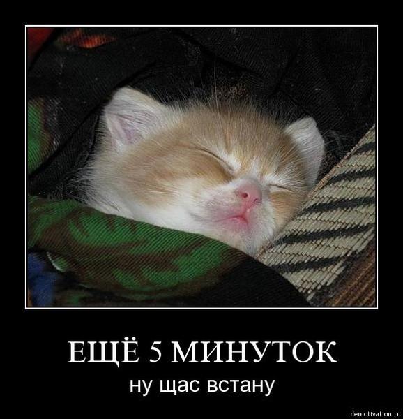 Открытка просыпайся засоня