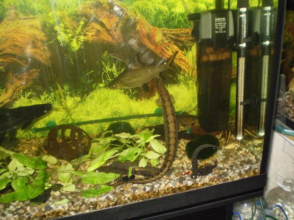 сможете отписаться кошачий сом как ухаживать в аквариуме поиск