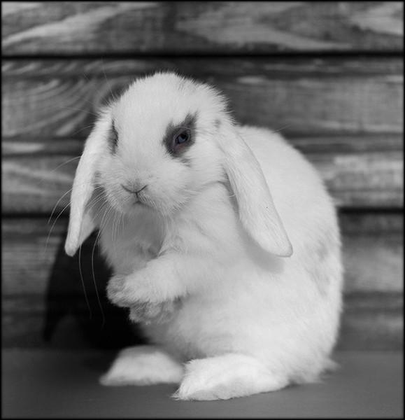 фото плачущий зайка кролик принимал участие