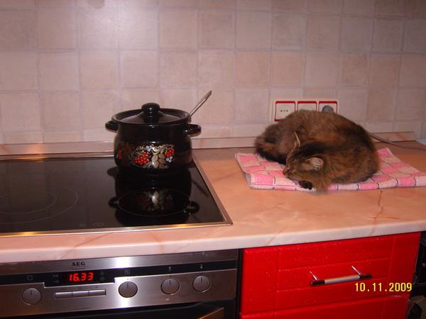 Кот лазиет по столом что делать