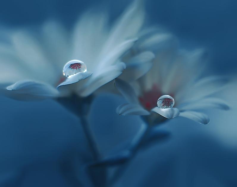 друзьями, красивая картинка с цветком и слезой края получились выше
