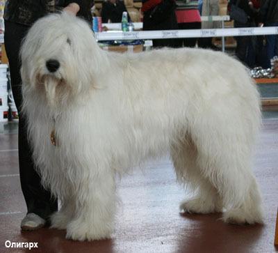 Большая волосатая собака порода
