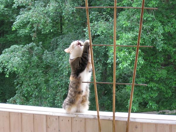 Ответы@mail.ru: хозяева кошек,живущих в квартире , как вы вы.