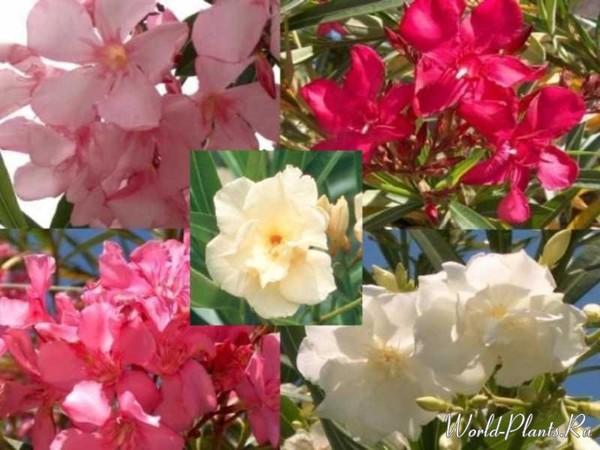 Ядовитые цветы в турции