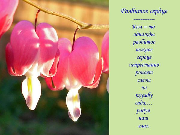 меня очень цветков где мое сердце реализуется