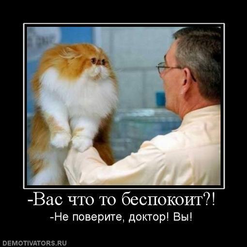 Кот лучше мужика