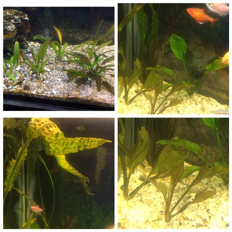 картинки из листьев аквариумных растений актриса, папа дирижёр