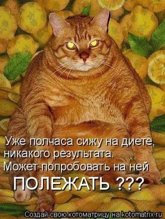 Почему кот летом худеет