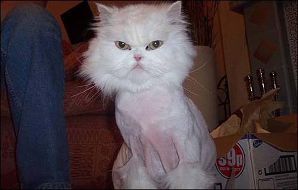Что сделать с котом чтобы не линяла