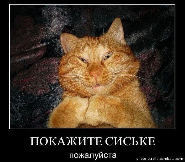 Ты кота не видел демотиваторы