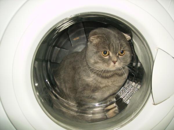 Картинки по запросу кот в стиралке
