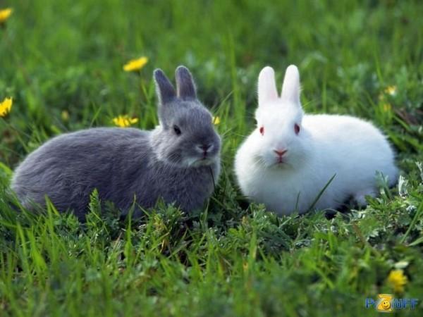 сколько и как варить кролика