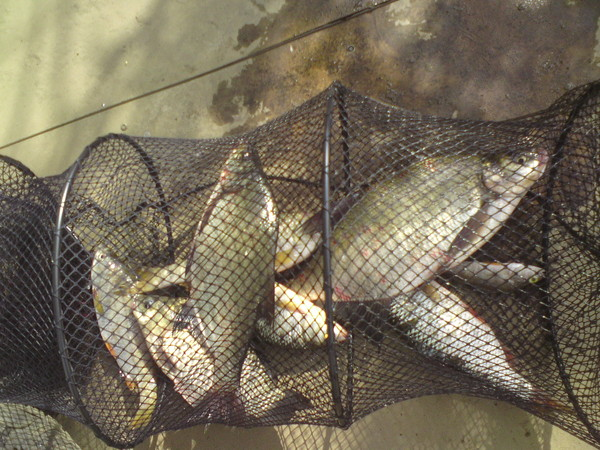 как приготовить прикормку для рыбы