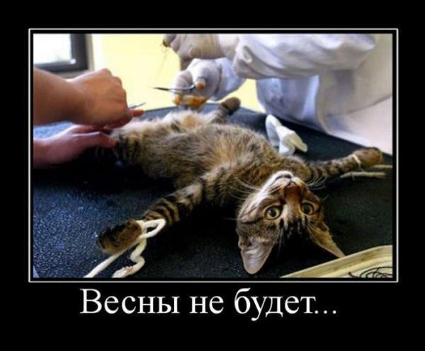 Кот кровоточит после кастрации