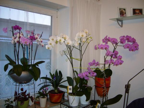 Орхидеи можно ли ставить в спальне