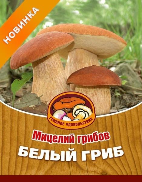 Покупка белого гриба