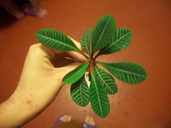 как по фото узнать название растения по фото