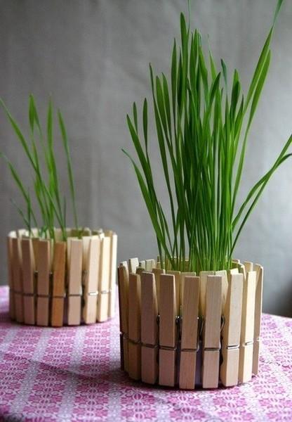 лук комнатное растение фото