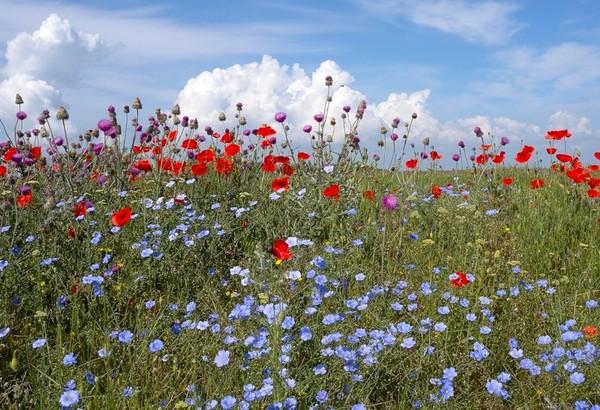 цветущие луга фото