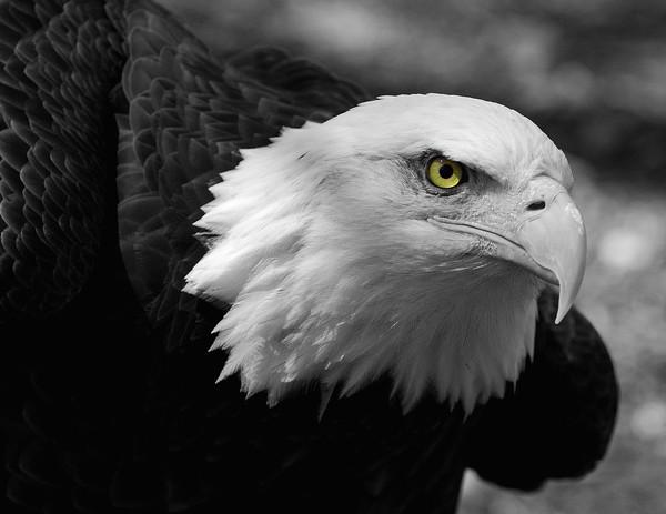нитями картинки на аву орел войны беспредел
