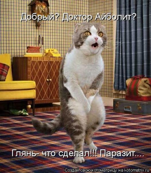 Когда коты мяукают жалобно