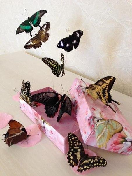 Открытки, открытки с живой бабочкой