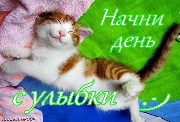 https://otvet.imgsmail.ru/download/80705287_afeb9bcde1517a11a67a1c5ff47cdd09_800.jpg